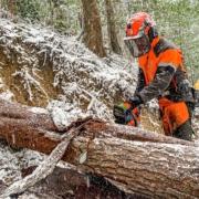 四万十川で林業